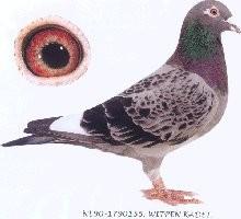 NL90-1790155.